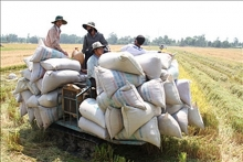 regulations impeding rice enterprises abolished