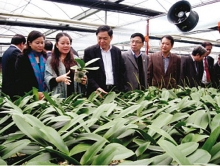 hanoi needs high tech agricultural zones