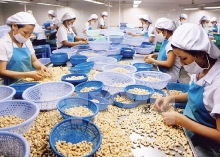 cashew exports see successful year
