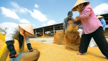 mekong delta targets us 15 billion in export revenue