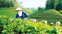 agricultural restructuring must be permanent and persistent