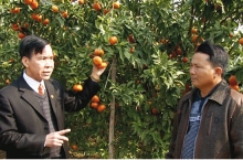 luc ngan the cradle of high quality fruits