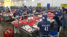farmers gain as tra fish prices soar 20 year peak
