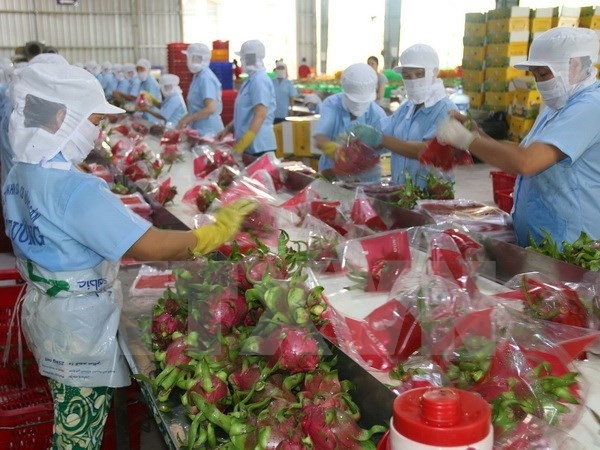 binh thuan set to grow 9800 ha of vietgap dragon fruits in 2018