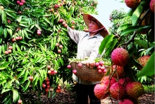 vietnam becomes supply hub with record agricultural exports