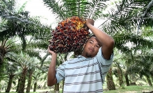 malaysia reviews trade with eu after move to limit palm oil use