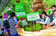 quality vietnamese products lack branding and trademark protection