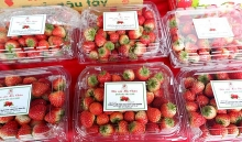 son la strawberry farm produce week opens in hanoi