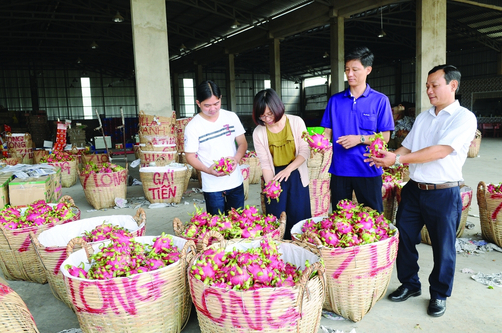 mekong delta farmers urged to link up with global value chains