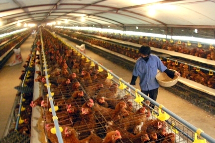 vietnamese chicken products to be exported to japan