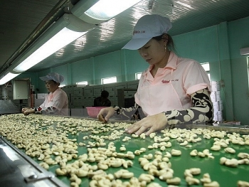cashew export predicted to earn 3 billion usd