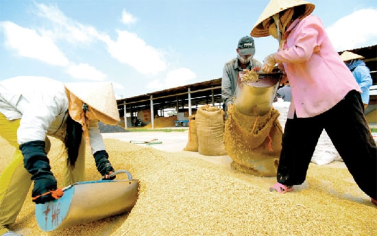 moit paves way for rice export comeback
