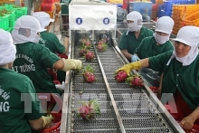 tien giang earns us 220 million in januarys exports