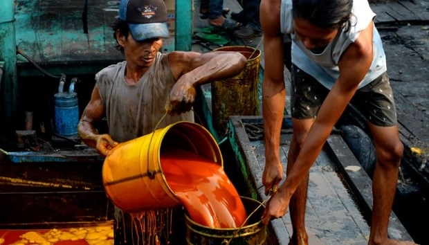 indonesias crude palm oil export projected to rise in next 10 years