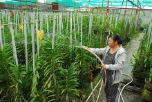 vinh long to revamp agriculture