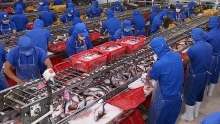 exports of tra fish to uk increase