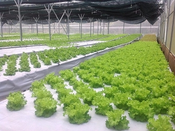 quang tri lures 160 billion vnd in hi tech agriculture