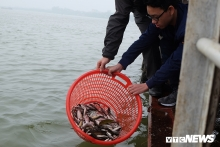 hanoi fish released into red river to raise conservation awareness