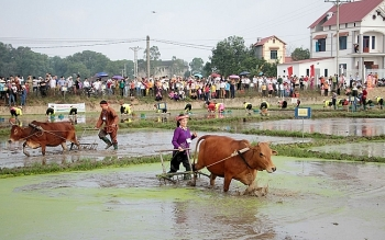 farmers in northern provinces begin ploughing the field