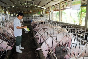 livestock sector focuses on exports
