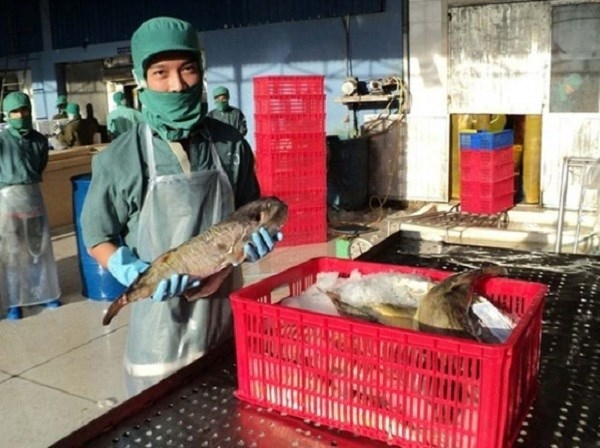 company in khanh hoa licensed to export pufferfish