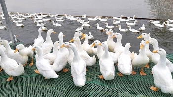 vietnamese duck meat to be shipped abroad
