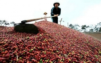 vietnam second biggest coffee supplier of belgium