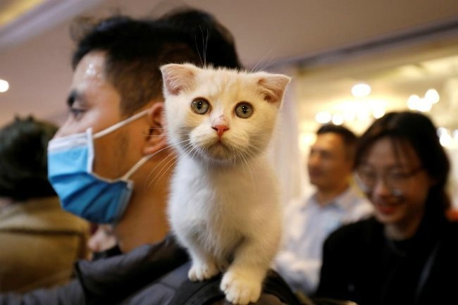 first ever cat show held in hanoi