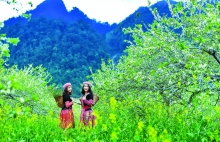 vietnam taps domestic tourism as vehicle to drive industry recovery