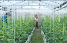 hanoi promotes science technology in agricultural production
