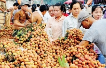 fruit veggie exports overtaking rice