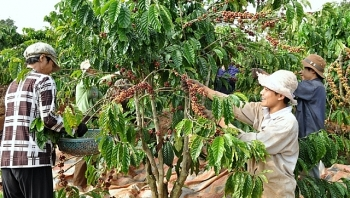 vietnamese farmers offered financial support to expand sustainable production