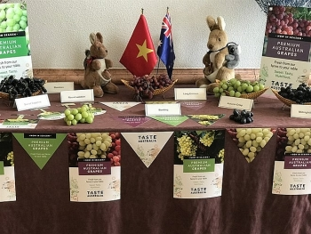 australia to boost trade ties with vietnam through table grapes