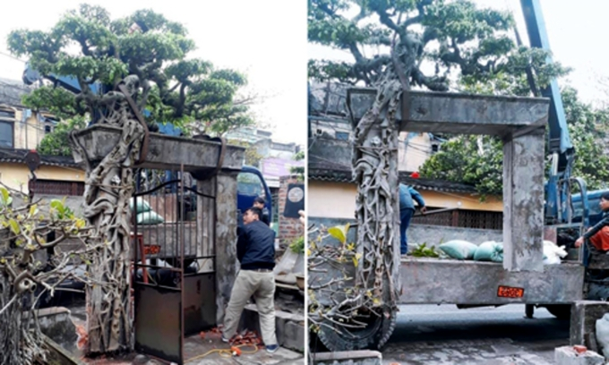 ornamental plant lover buys gate to get tree growing on top
