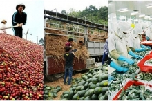 agricultural sector posts trade surplus of 1 billion usd in 2 months