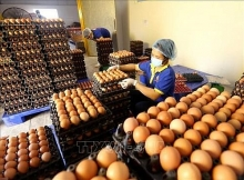 vietnamese japanese companies ink raw egg distribution deal