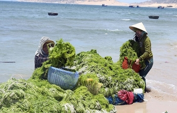 marine economy makes up 10 percent of vietnams gdp