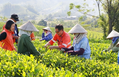 tea industry prepares to accommodate new consumer trends