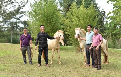 unique white horse festival in lang son province
