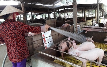 agricultural minister calls on businesses to support pig farms