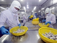 vietnams shrimp export to japan shows signs of recovery