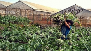 over vnd 50 billion invested in herb planting in lam dong