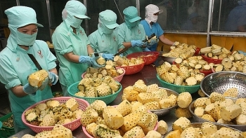 agro forestry fishery exports fetch us 124 billion in four months