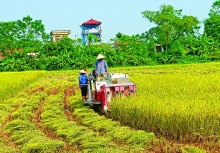 vietnam feeds itself and the world strives for food security under all conditions