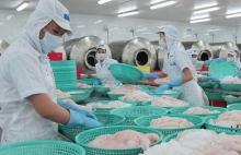 us reduces import duties on vietnamese tra and basa fish
