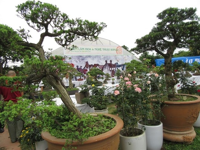 Bonsai Rose Show Cheers Nature Lovers Society