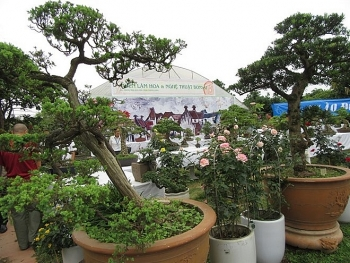 bonsai rose show cheers nature lovers