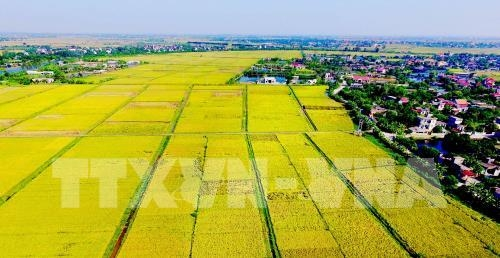 thai nguyen spends 840 billion vnd on agricultural restructuring