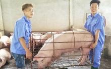 pork production chains are the answer