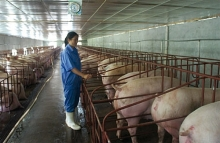govt seeks to reform animal husbandry